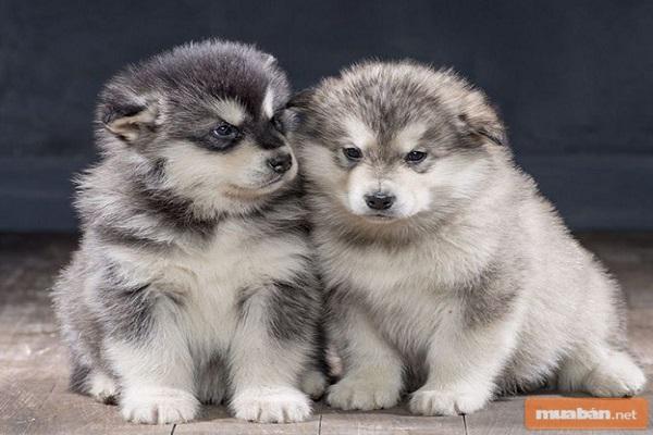 Cùng chúng tôi tìm hiểu về việc mua chó con nhé