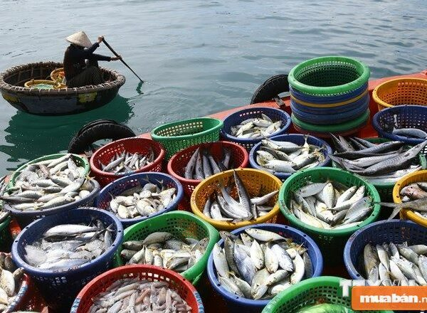 Việc làm thủy sản