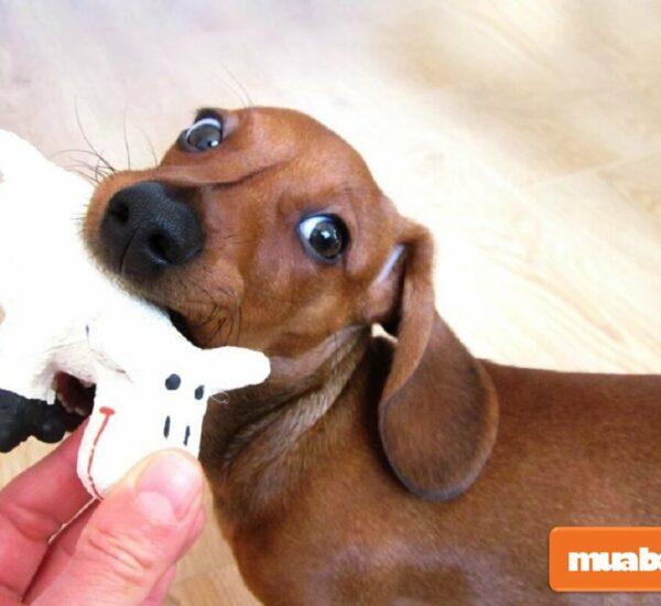 Chó lạp xưởng: Đặc điểm, tính cách, giá bán