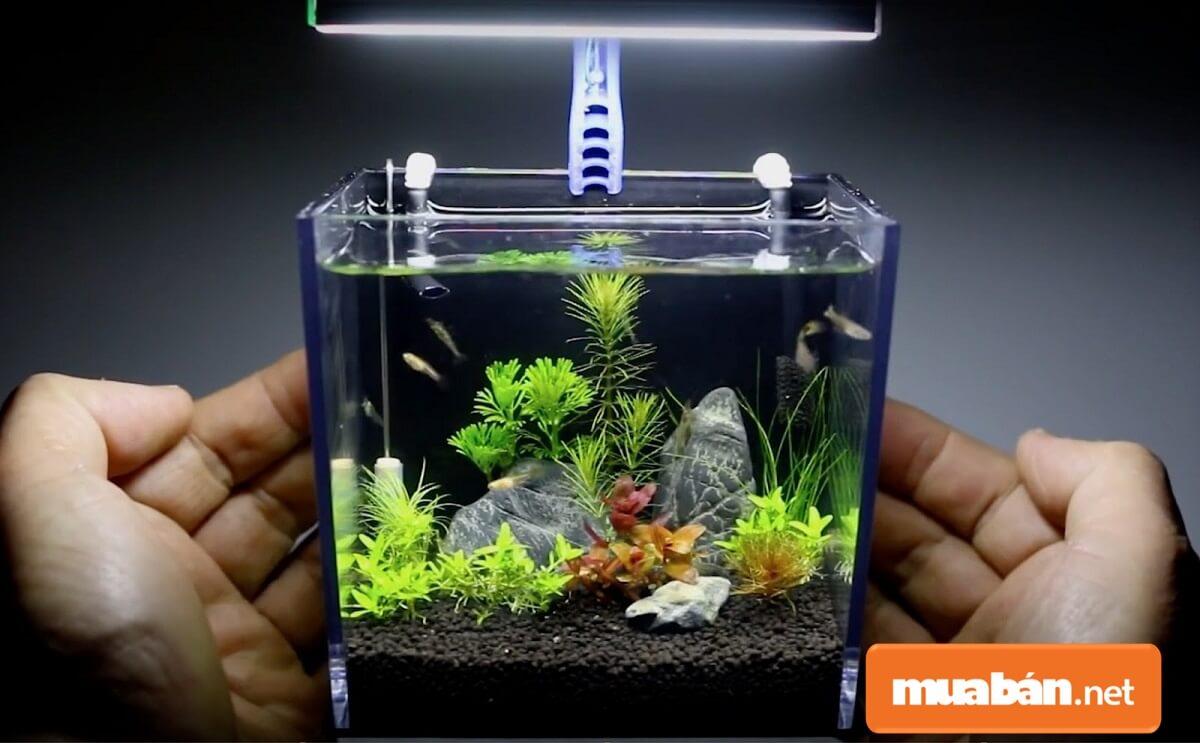 Bể cá cảnh tạo không gian sinh động hơn cho văn phòng