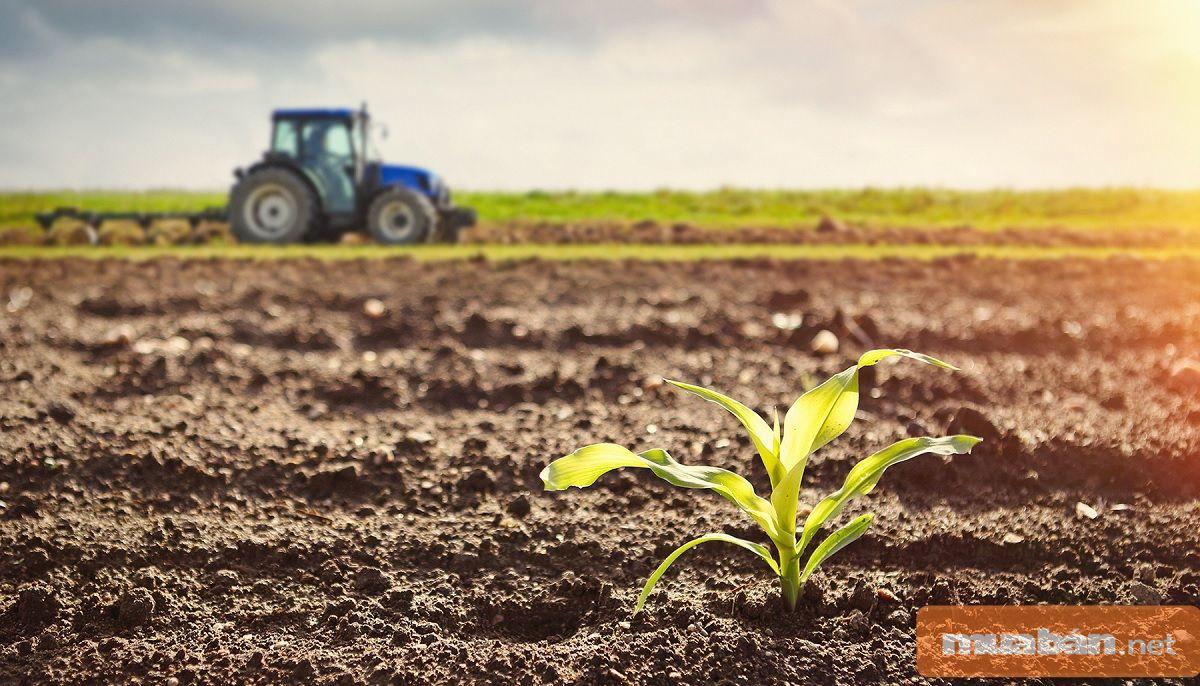 Đất sẽ trở nên tơi xốp, tăng khả năng giữ ẩm, tăng cường sự trao đổi chất cân bằng trong đất.